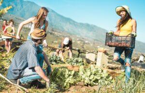 Le Imprese Sociali Rurali, come collegare  le comunità rurali alle reti sovra-regionali