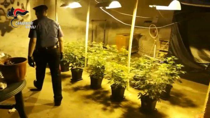 "Casoria, dal produttore al consumatore: serra ""high level""  per coltivare marijuana"