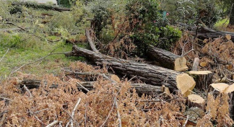 Vairano Patenora, tagliavano gli alberi del bosco per vendere legna da ardere