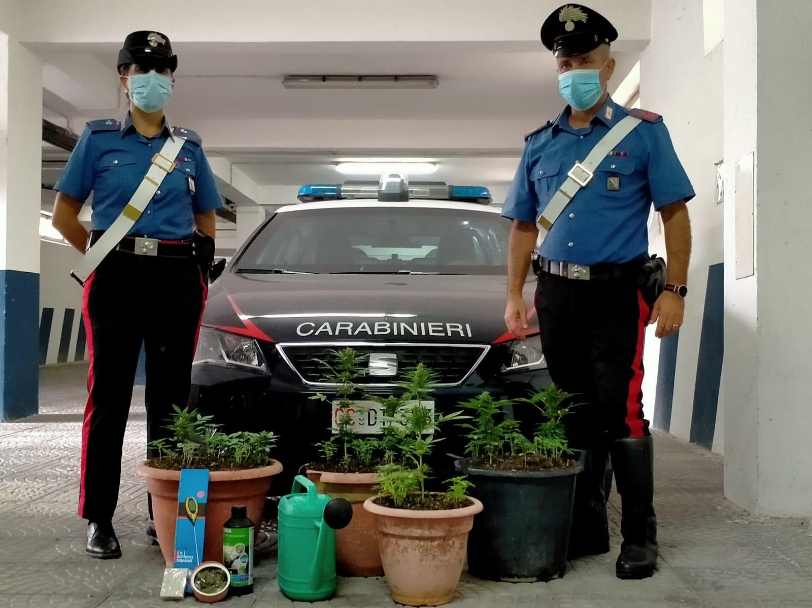 Coltivavano piante di cannabis: denunciate due persone a San Lorenzello e Morcone