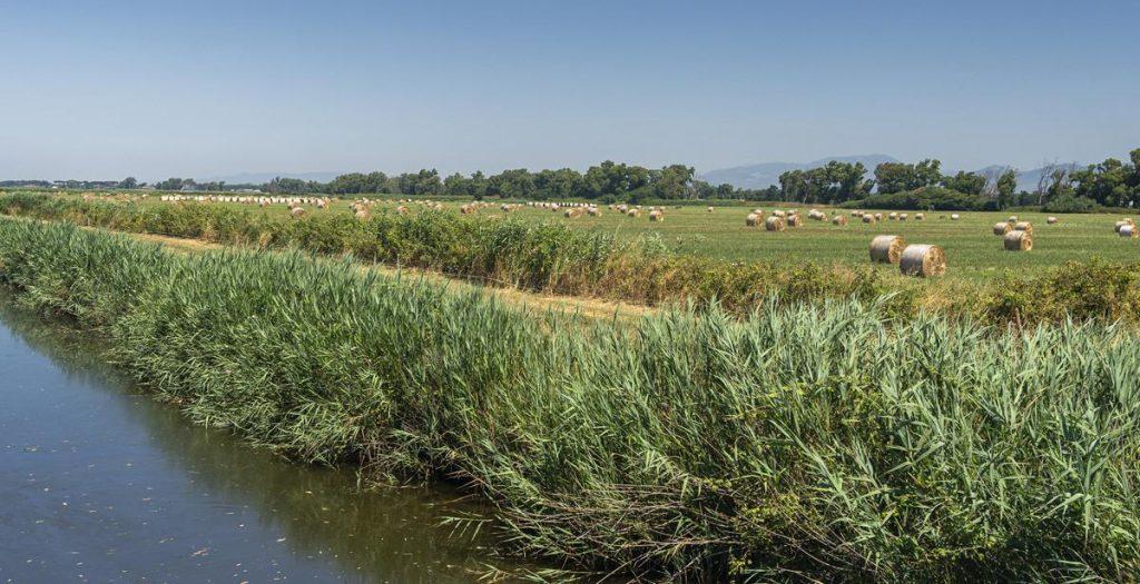 CONSORZI DI BONIFICA AGRO PONTINO E SUD PONTINO: ULTERIORI 7,5MLN IN TRE ANNI